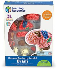 Learning Resources Anatomy Model Brain