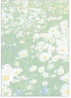 sigel DP698 Motiv-Papier, A4, 90g/qm, Motiv: Spring