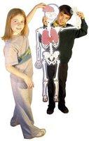 Eduplay Skelett mit Organen