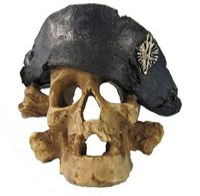 Zooplus Piraten Totenkopf (14 x 14 x 10 cm)