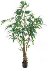 Europalms Ficus Longifolia dickstämmig 180 cm