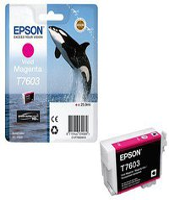 Epson T7603 magenta (C13T76034010)
