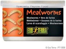Exo Terra Mehlwürmer 34g