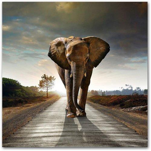 "Home Affaire Acrylglasbild  ""Elefant "" (50x50cm)"