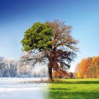 Eurographics 4 Seasons 50x50cm