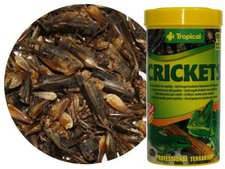 Tropical Crickets (250 ml)