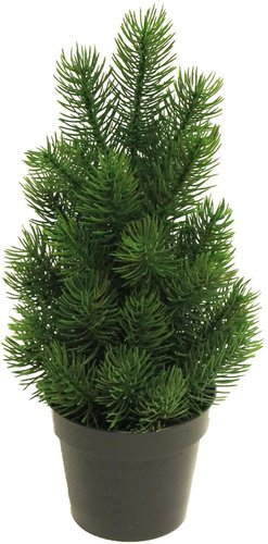 Tannenbaum im Topf