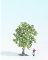 Noch 28111 - Obstbaum, weiß blühend