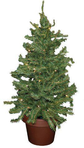 weihnachtsbaum im topf ab 7 77 jetzt bei kaufen. Black Bedroom Furniture Sets. Home Design Ideas