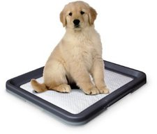 Nobby Doggy Trainer L (62.5 x 48 x 3.8 cm)