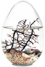 Globus International Beachworld Oval mit Gorgonie (13 cm)