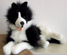Carl Dick Border Collie