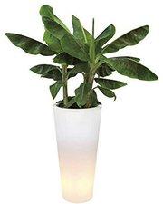 Elho Pure Straight LED Light 50 transparant