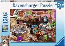 Ravensburger Katzen in der Küche