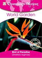 Paradiesvogel-Blume (Strelitzia)