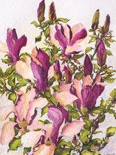 Susan Magnolie/Magnolia liliiflora