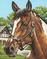 Schipper Malen nach Zahlen Pferdeportrait