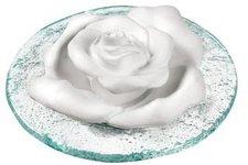 TAOASIS Rose und Glasteller